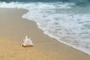 A shellfish on the beach by the ocean.