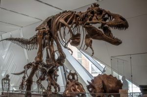 An image of a dinosaur in Ontario Museum, a must on any newcomers' guide to Toronto